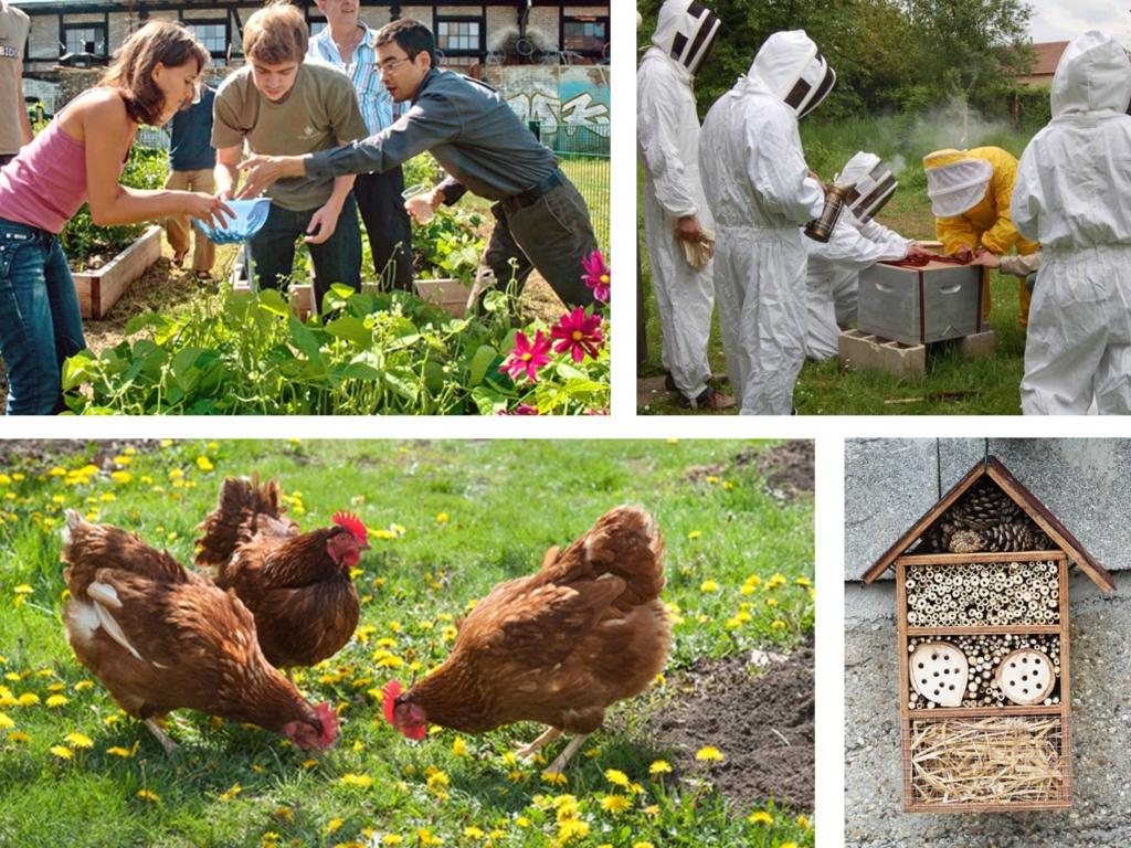 permaculture en entreprise