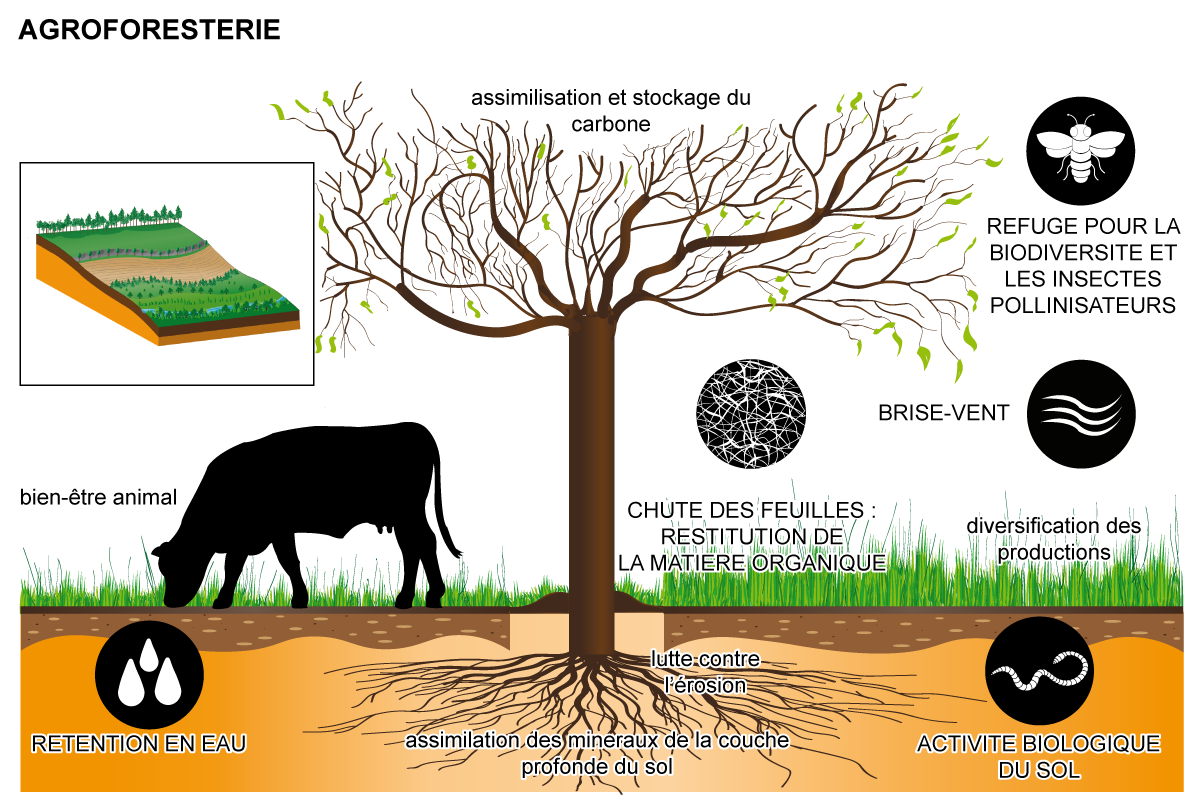 Agroforesterie permaculture design agroécologie
