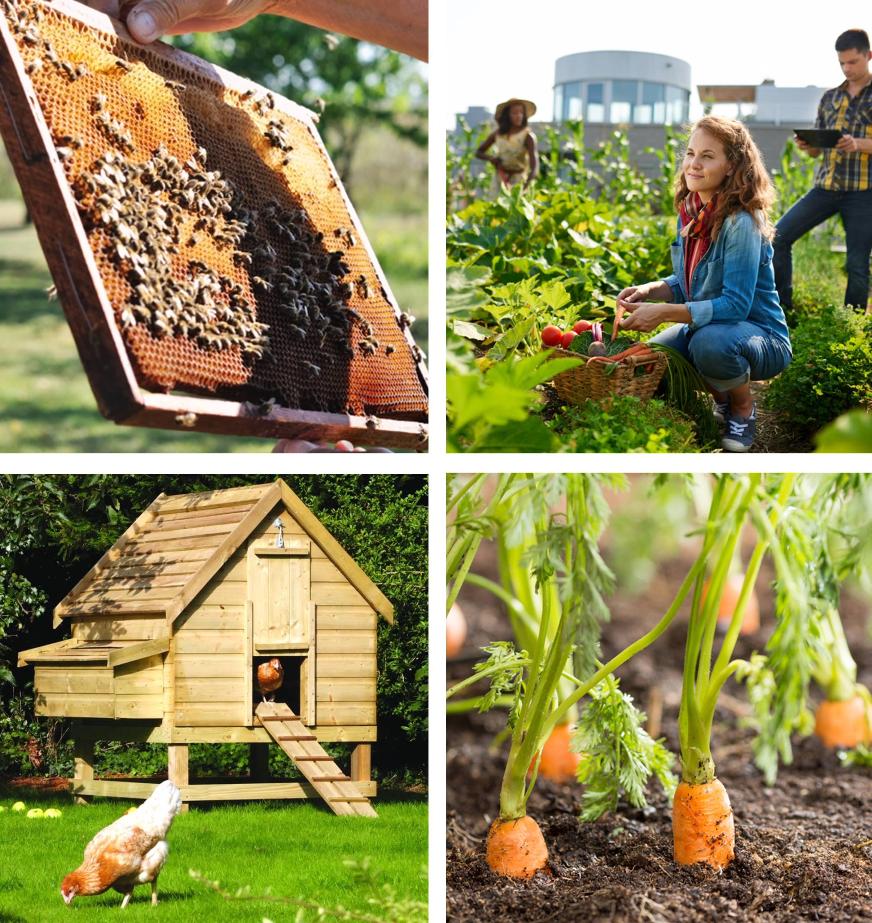 agriculture urbaine entreprise